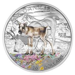 20 Dollars Argent Canada BE 2016 colorisée - Bébé Caribou