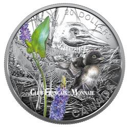 20 Dollars Argent Canada BE 2016 colorisé - Bébé Huart à collier
